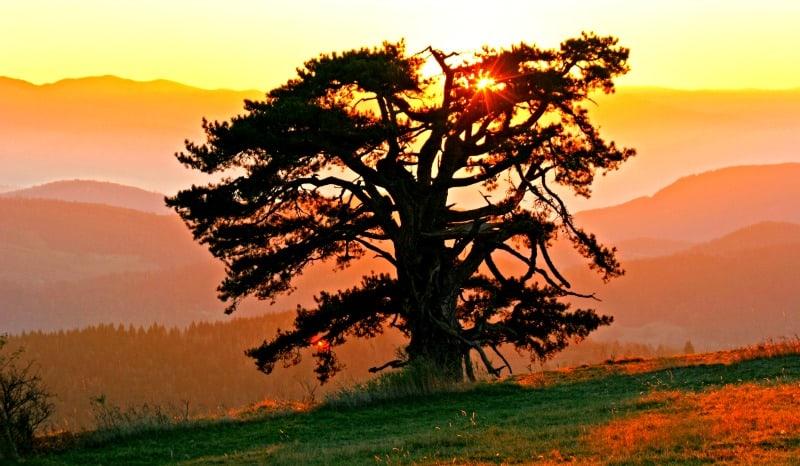 Sveti Bor - Kamena Gora