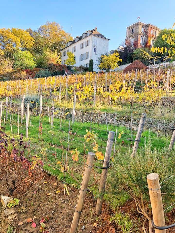 Paris Vineyard, France